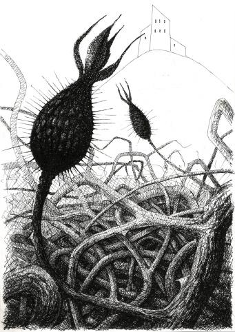 Rose Bush, Pen & Ink Drawing, Sholto Turner